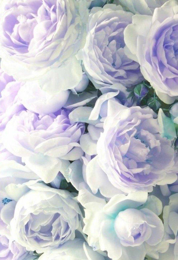 photographie-jolie-la-beauté-de-la-nature-choux-fleur-violet-image-roses-blaches