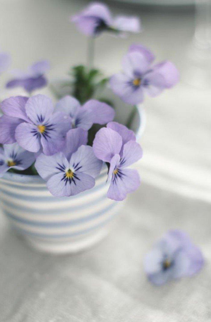 Les plus belles fleurs violettes en beaucoup d39images for Maison a faire soi meme 2 le vase boule petit objet avec de grandes idees