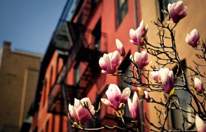 photographie-printemps-saison-professionnelle-photo-printemps-beauté-magnolia-dans-la-ville