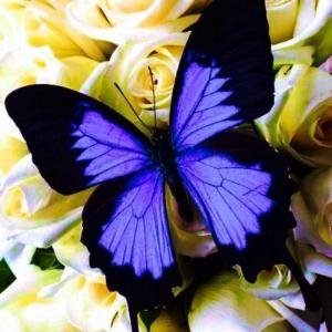 La beauté de la planète - jolies photos de papillons