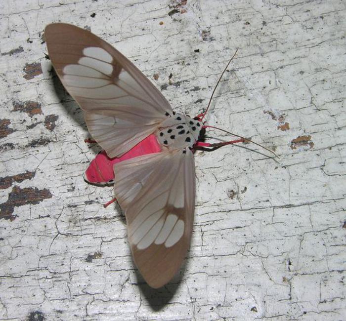 photos-de-papillons-espèces-de-papillons-uniques