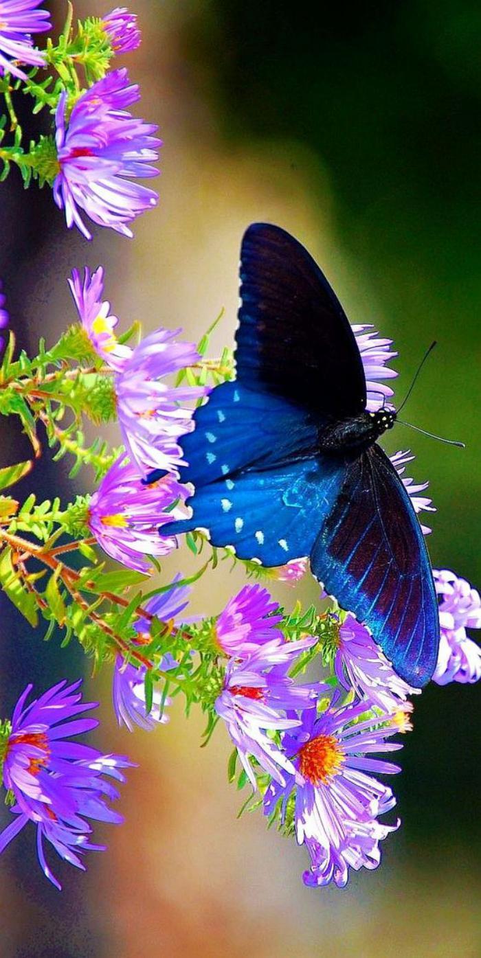 photos-de-papillons-images-de-papillons-prises-au-bon-moment