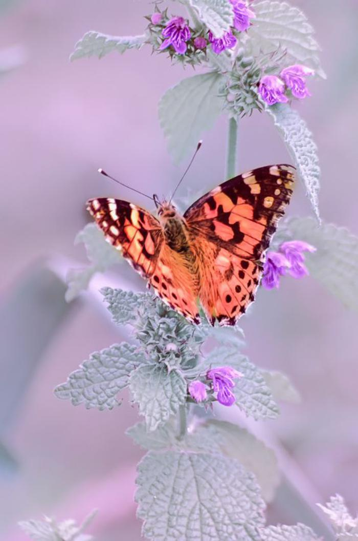 photos-de-papillons-joli-papillon-photographie-fantastique