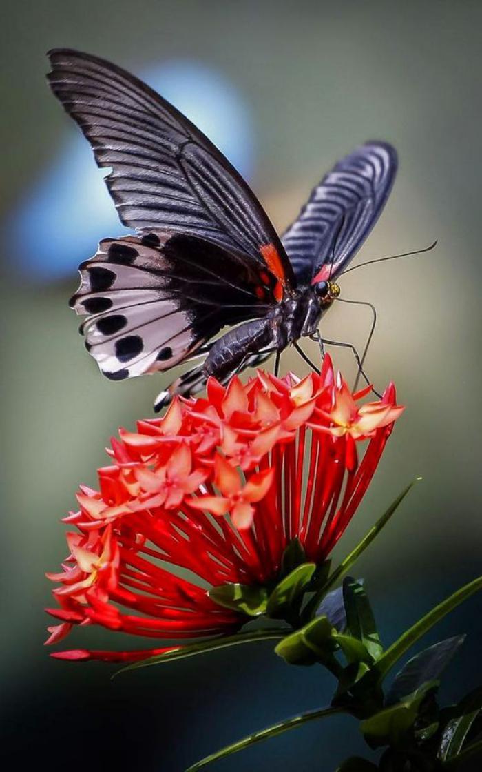 photos-de-papillons-jolie-photo-papillon-images-de-papillons