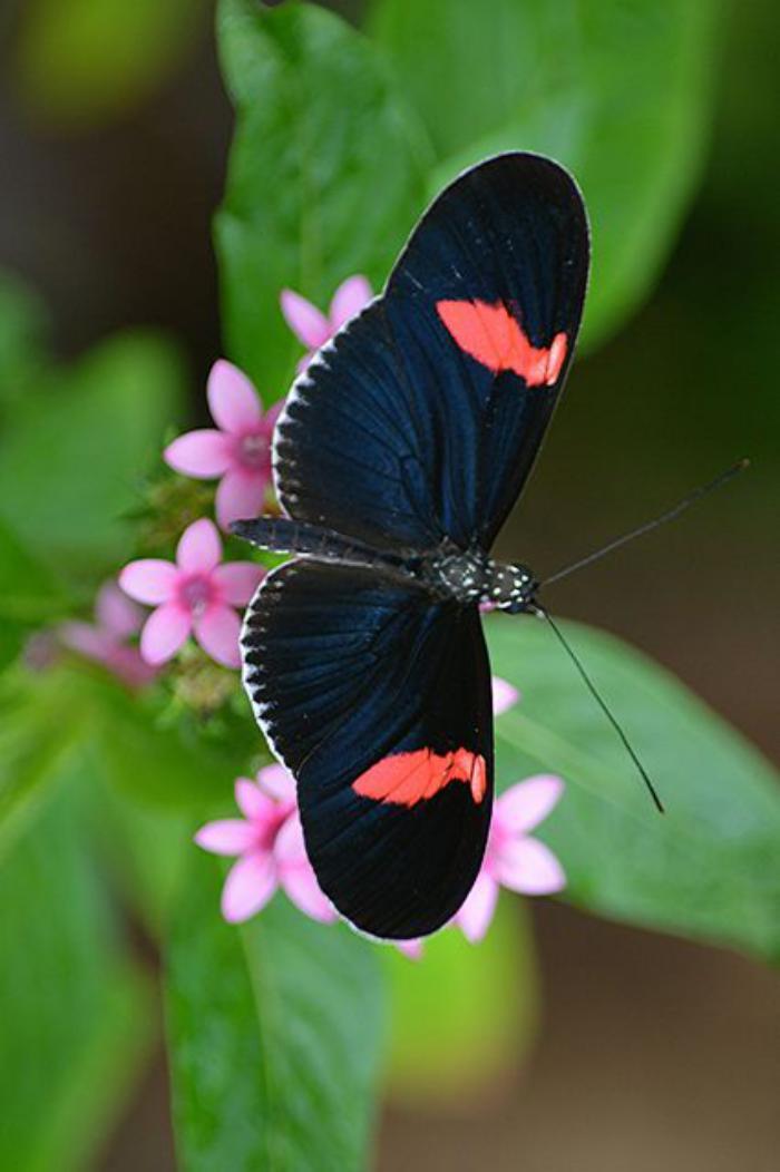 photos-de-papillons-la-vie-des-créatures-uniques