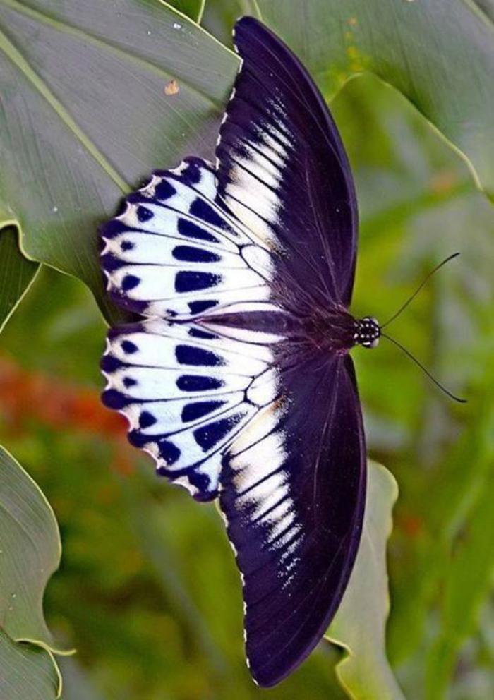 photos-de-papillons-les-secrets-des-papillons