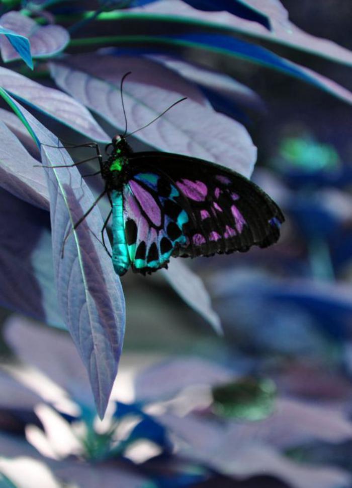 photos-de-papillons-papillon-bariolé-en-teintes-magnifiques