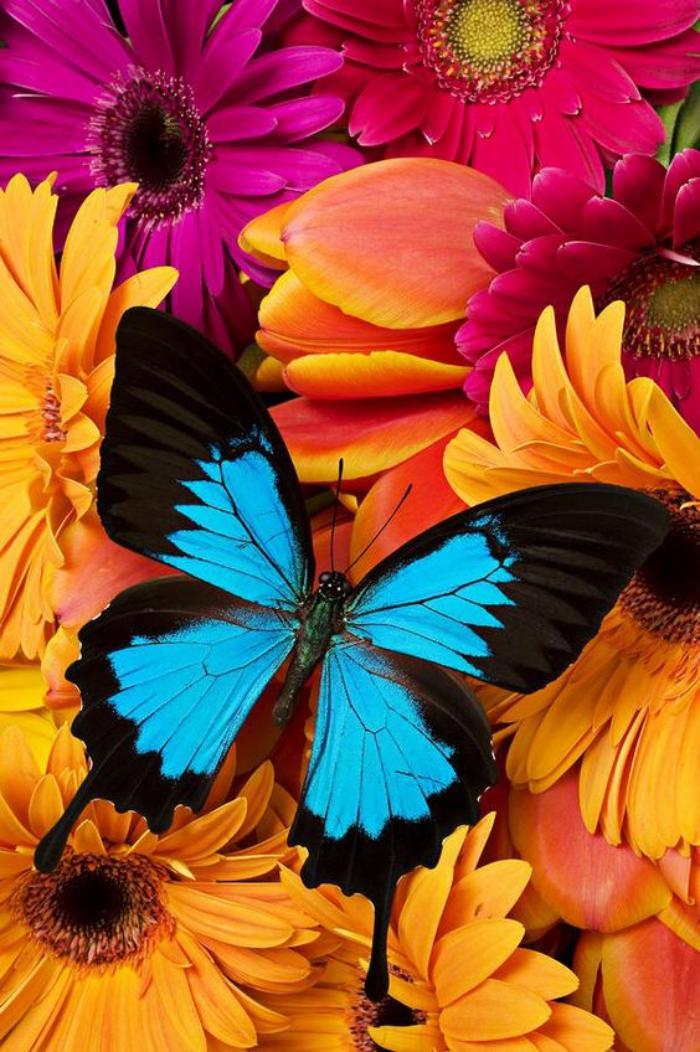 photos-de-papillons-papillon-bleu-juché-sur-un-bouquet