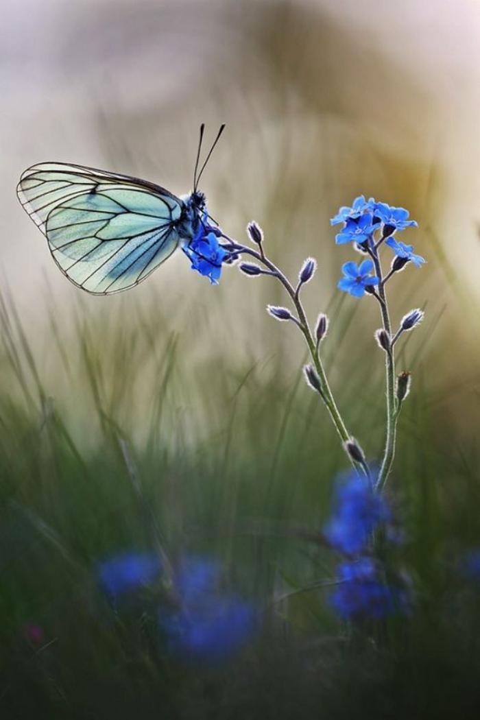 photos-de-papillons-papillon-et-plaine-image-jolie-de-papillon-bleu