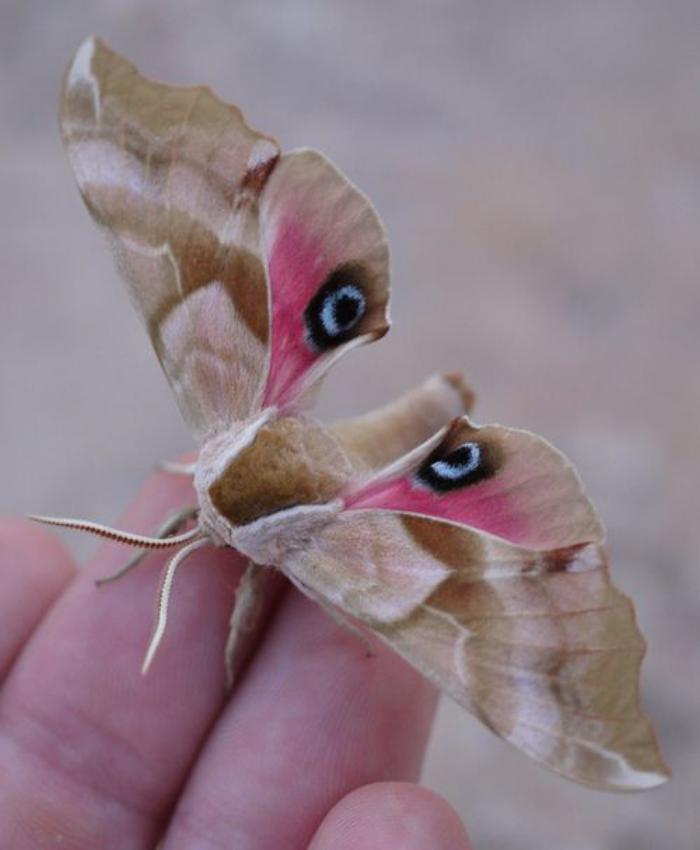 photos-de-papillons-photo-de-papillon-bizarre