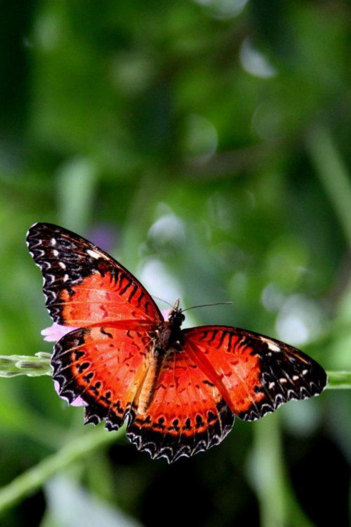 photos-de-papillons-photo-de-papillon-noir-et-orange