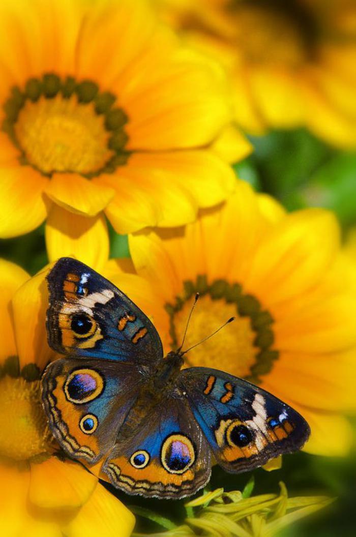 photos-de-papillons-photo-papillon-joli-sur-une-fleur-jaune