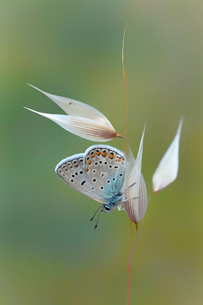 photos-de-papillons-photos-de-papillons-fantastiques