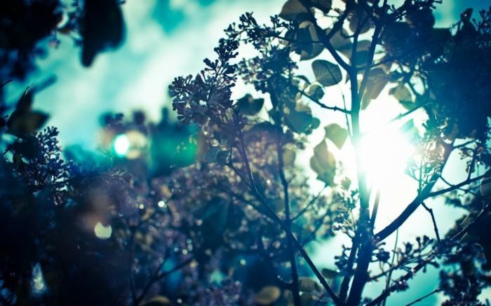 printemps-arabe-beauté-image-trop-cool-à-voir-intéressante-inspiration