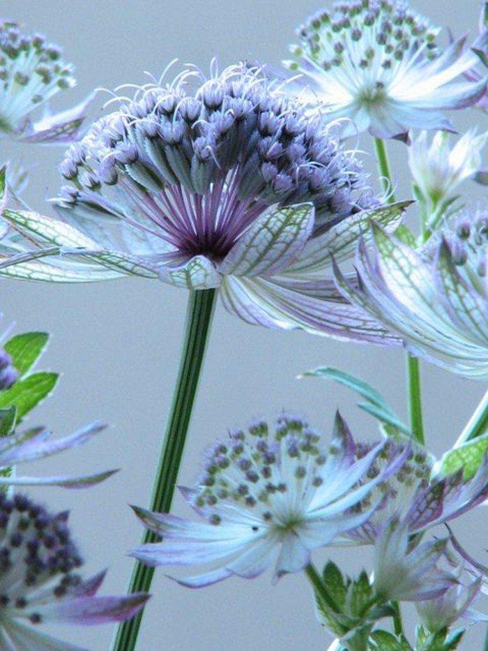 les plus belles fleurs violettes en beaucoup d 39 images charmantes. Black Bedroom Furniture Sets. Home Design Ideas