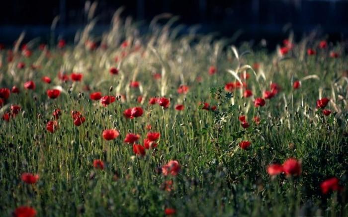 superbe-image-trop-jolie-le-printemps-liste-sacre-du-printemps-