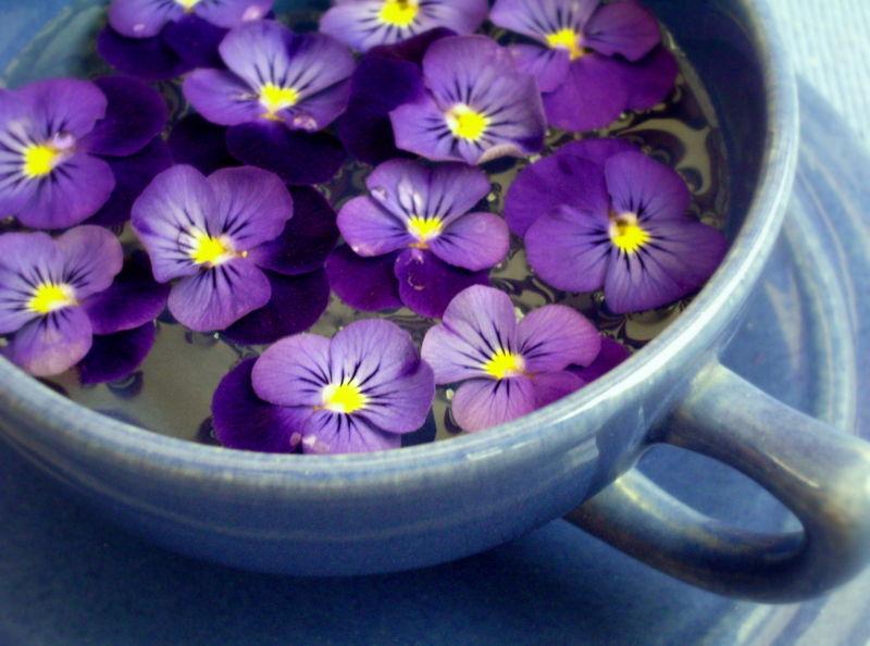 superbre-fleur-mauve-fleur-violette-fleurs-des-alpes-jolie-photographie-la-tasse