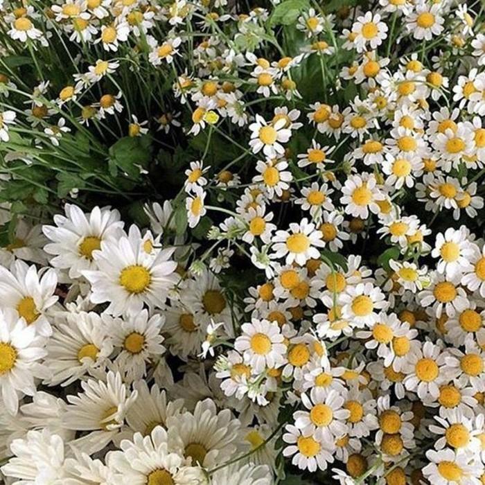 une-image-trop-jolie-le-printemps-liste-sacre-du-printemps-fleurs