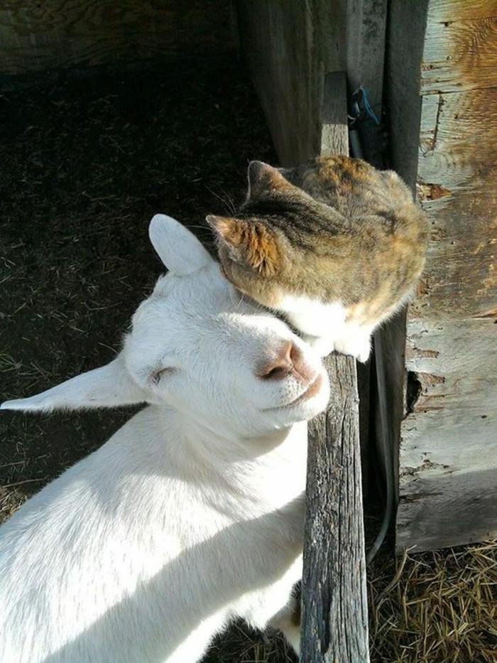 adorable-animal-mignon-petit-animal-mignon-chateau-et-chevreau