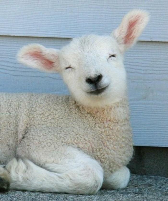 adorable-animal-mignon-petit-animal-mignon-en-blanc