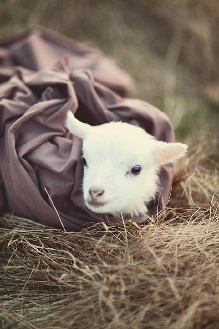 animaux-mignon-bebe-animaux-formidable-beau