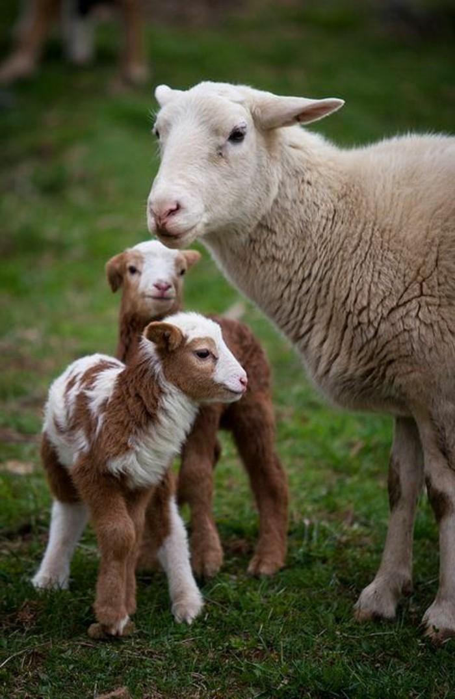 animaux-mignon-bebe-animaux-formidable-petits