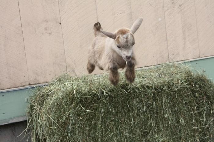 animaux-mignon-bebe-animaux-formidable-trop-petit