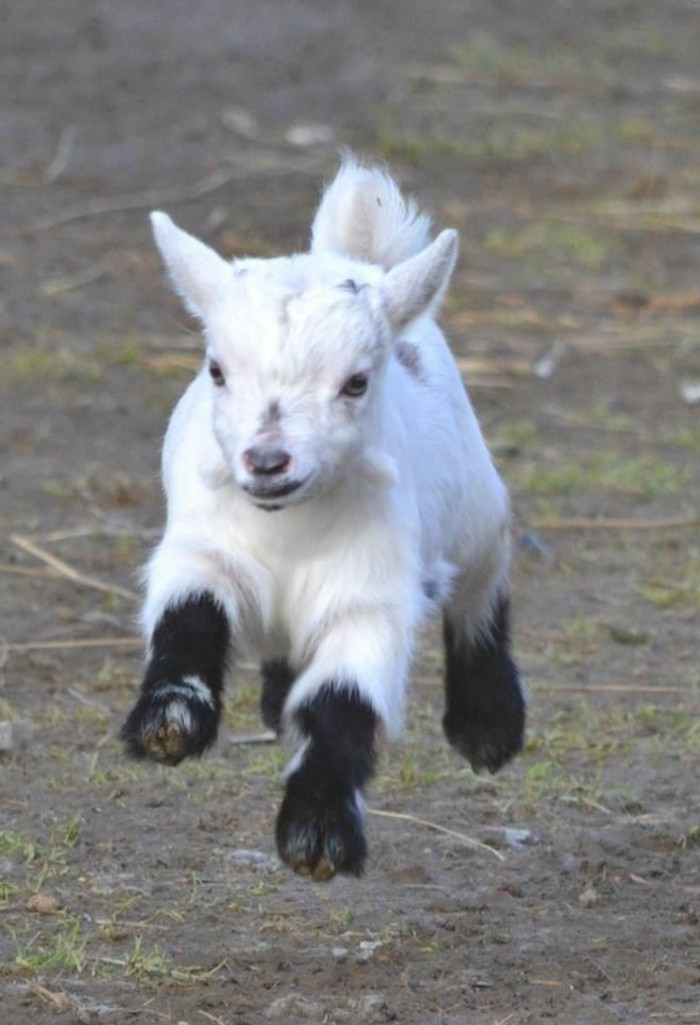 animaux-mignon-bebe-animaux-formidable-une-choute