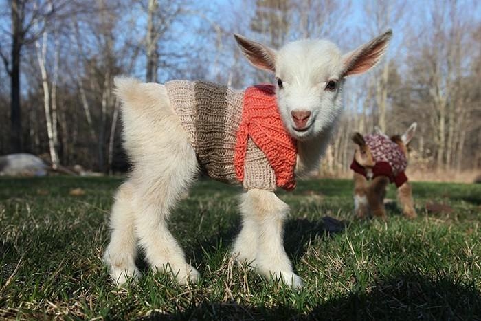 animaux-mignon-bebe-animaux-formidable