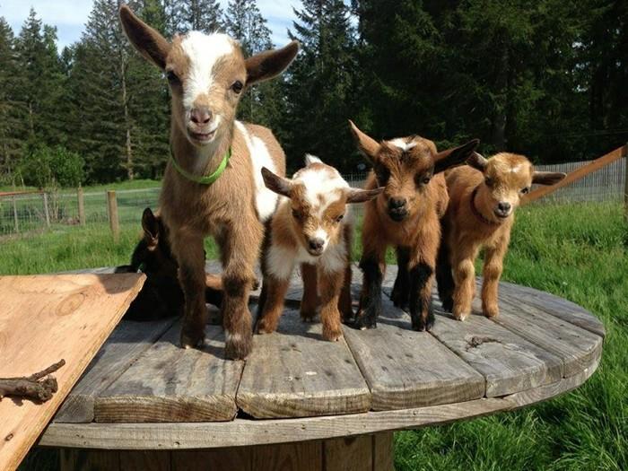 bebes-animaux-animal-trop-mignon-faune-nature-les-amies