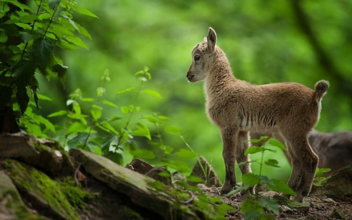 belle-photographie-les-animaux-les-plus-mignons-du-monde