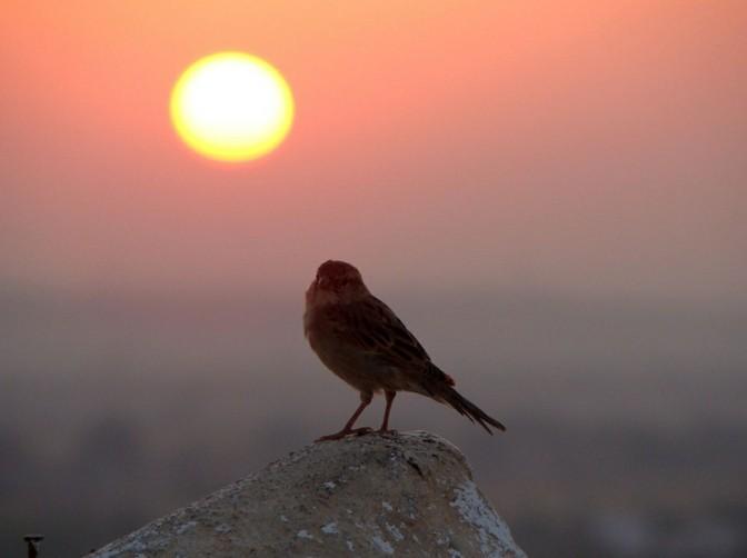 belles-images-soleil-levant-superbe-idée-photo-oisaux-de-matin