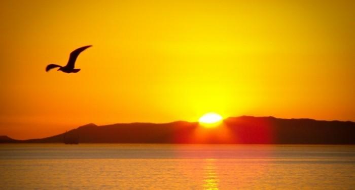belles-images-soleil-levant-superbe-idée-photo-oiseaux-au-bord-de-la-mer