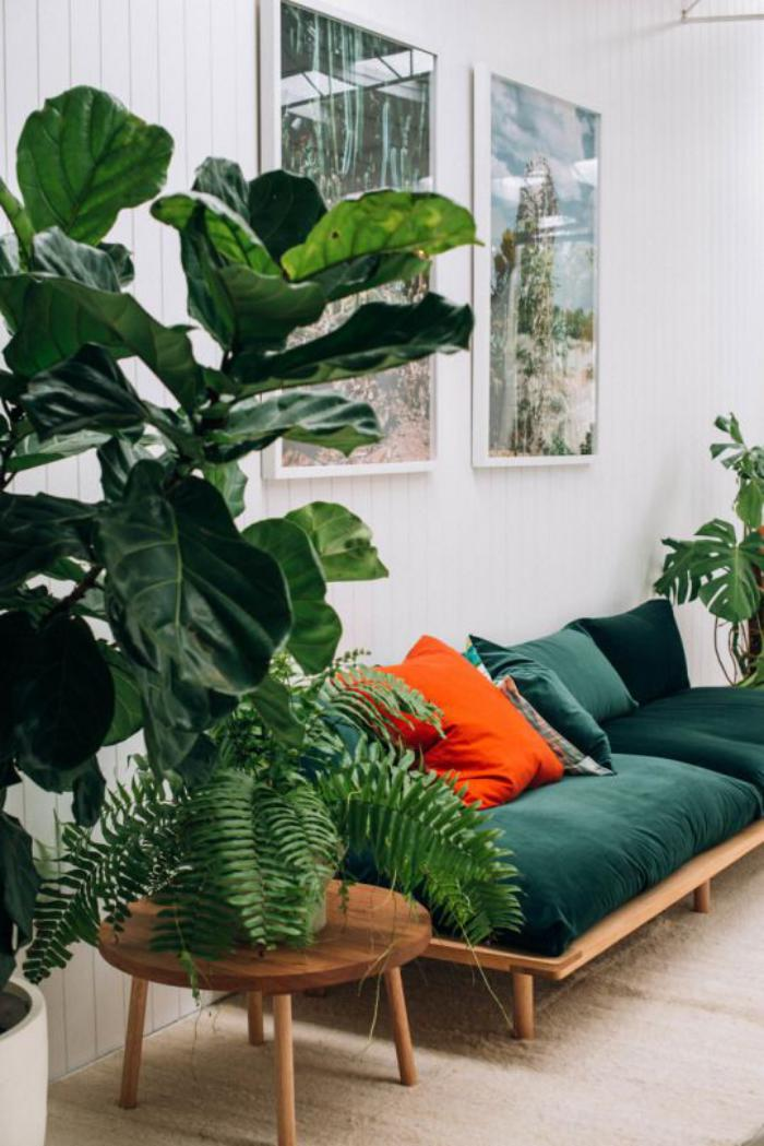 canapé-vert-plante-verte-jungle-coussin-en-couleur