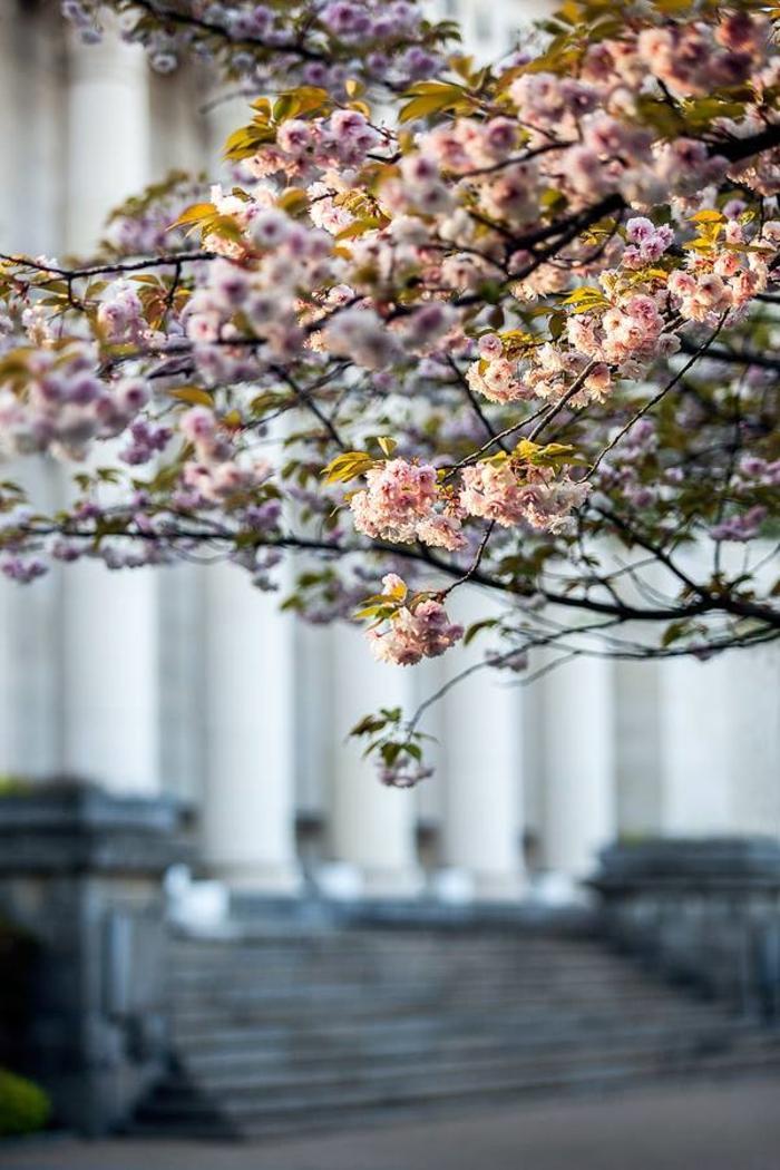chouette-arbre-printemps-bibliotheque-nationale-de-bulgarie