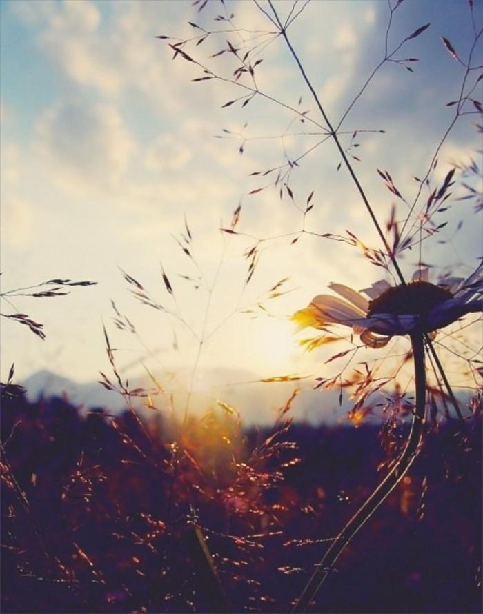 cool-image-fond-ecran-image-nature-belle-au-lever-soleil