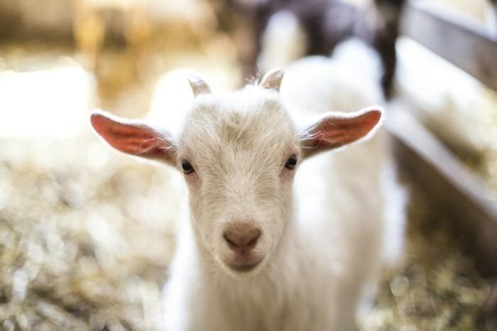 cool-photo-de-animaux-trop-mignom-image-belle