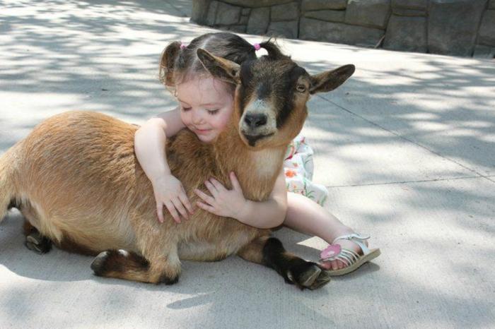 des-bébés-animaux-mignons-le-chevreau-sympathique-enfant