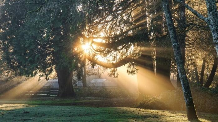 design-intérieur-éclairage-lampe-lumière-naturelle-vu-les-arbres