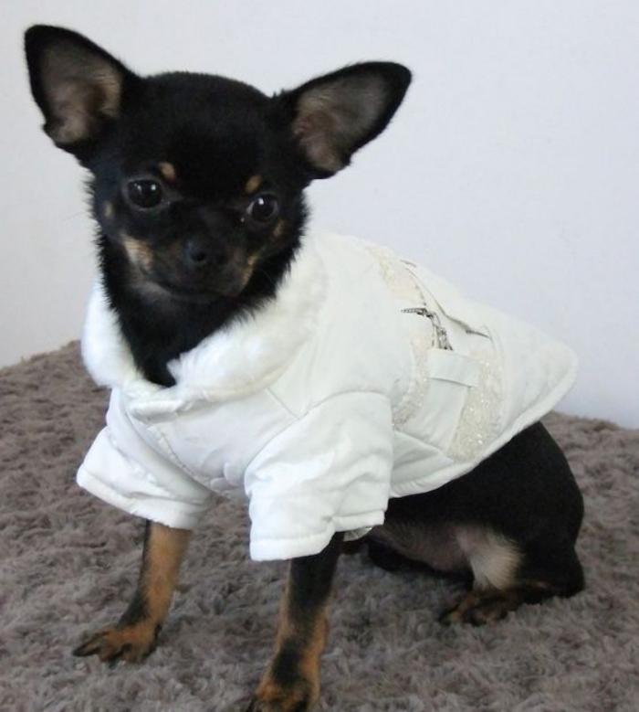doudoune-pour-chien-blanche-vetements-petits-chiens