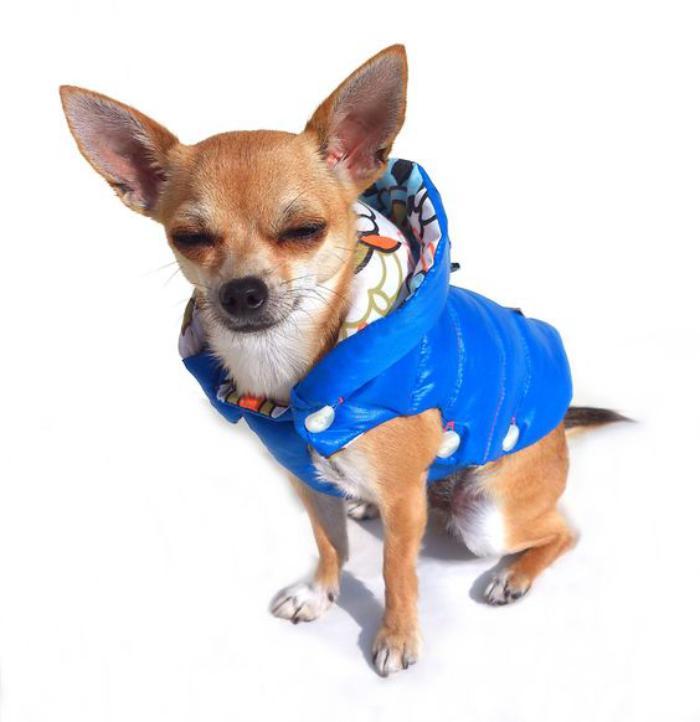 doudoune-pour-chien-chihuahua-bleue
