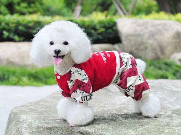 doudoune-pour-chien-doudoune-coquette-pour-petit-chien