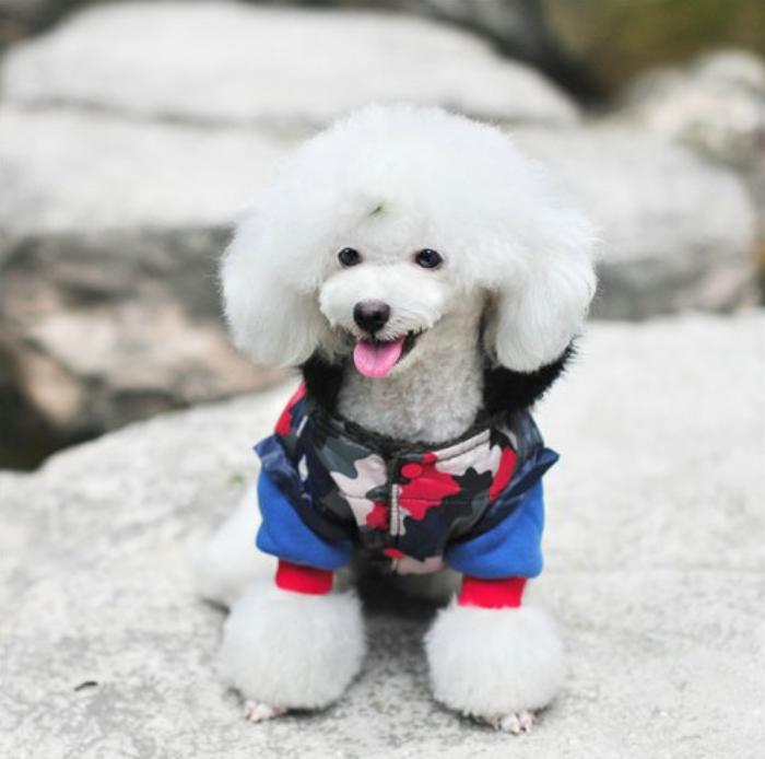 doudoune-pour-chien-jolis-habits-pour-chiens-manteau-camouflage