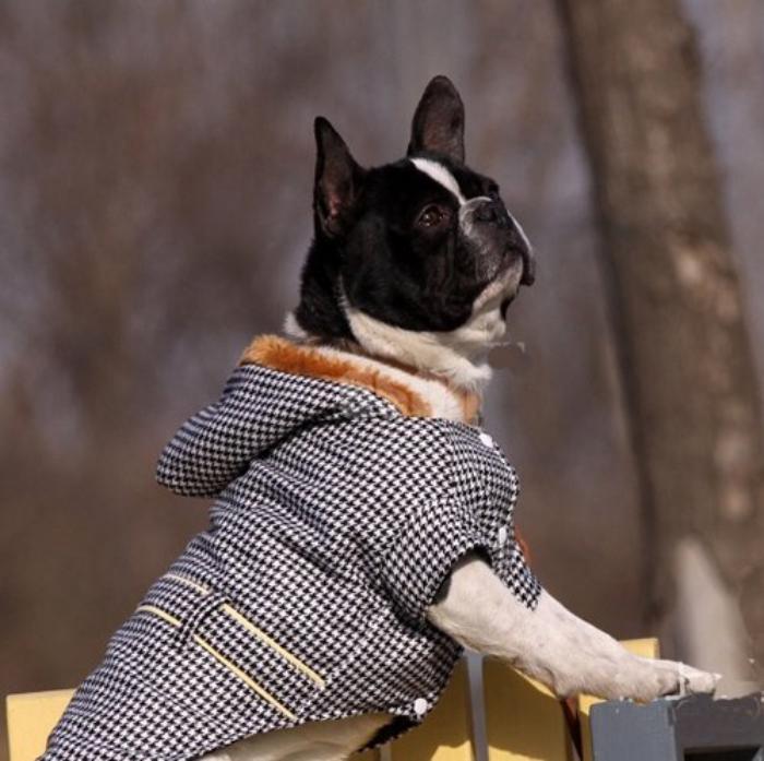 doudoune-pour-chien-manteau-pour-chien-tendance