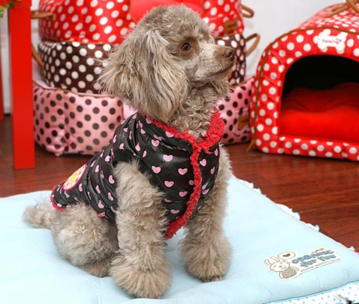 doudoune-pour-chien-mode-pour-chiens-vêtements-tendance