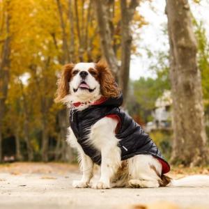 Habillez votre ami avec une doudoune pour chien