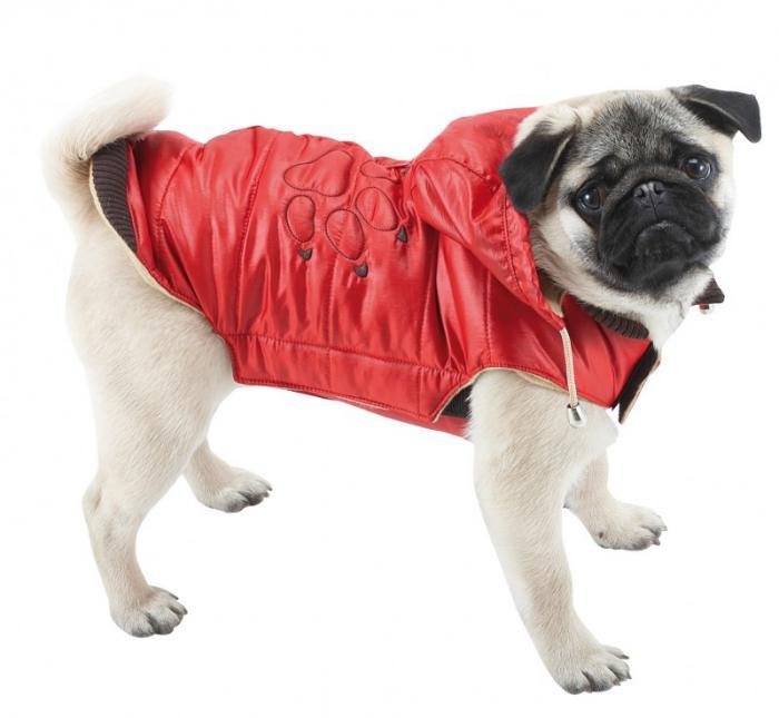 doudoune-pour-chien-rouge-manteau-d'hiver-chien