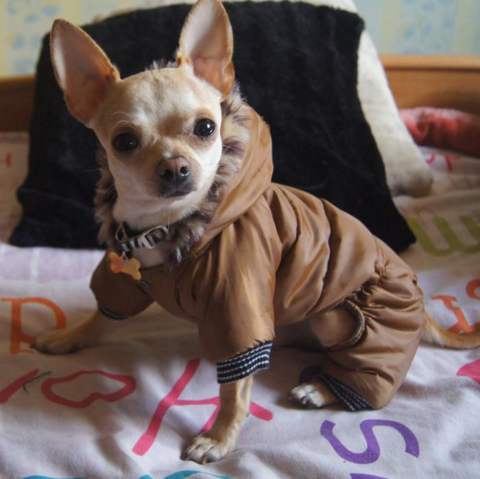 doudoune-pour-chien-vêtement-pour-petit-chien