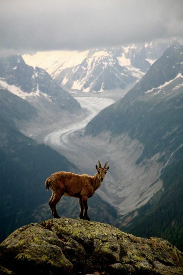 les-animaux-les-plus-mignon-du-monde-jolie-image-beauté-nature