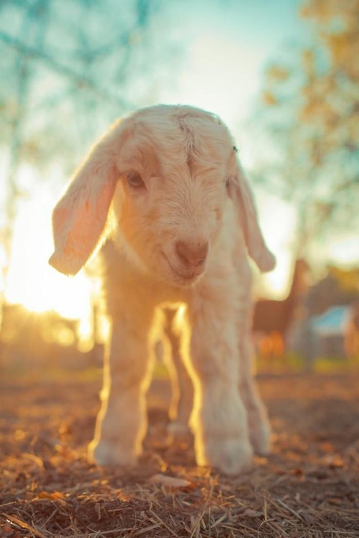 les-animaux-les-plus-mignon-du-monde-jolie-image-soleil